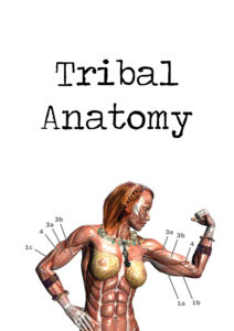 tribal_anatomy_hoch